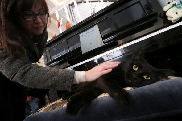 Sin duda MiaGola es una gran idea para los amantes de los gatos, los que...