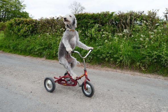 Con cuidado, sentaron al can en la bici.
