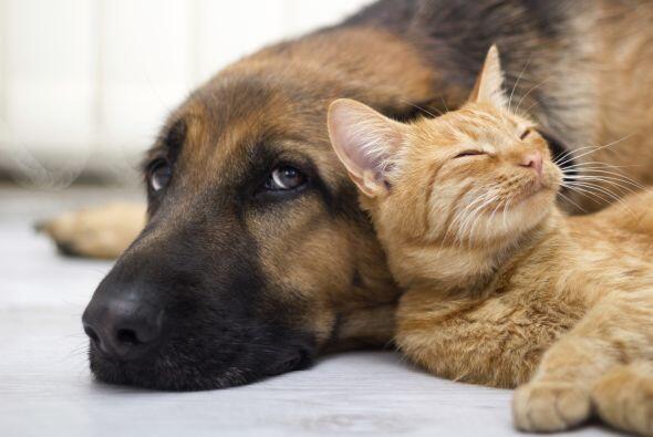 Los perros son fieles, nobles, leales y sinceros, solo esperan que les b...