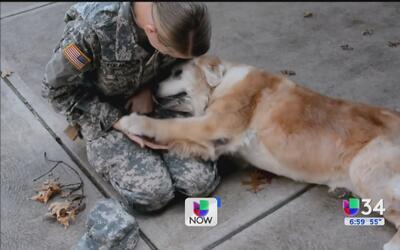 Emotiva reunión entre perrita y militar