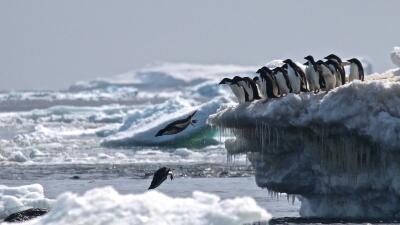 Fotos: Por años pensaron que estos pingüinos desaparecerían, ahora hallaron una megacolonia 'oculta' en la Antártida