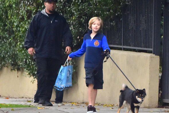 El adorable cachorro es de raza Shiba Inu y por la imágenes no rebasa el...