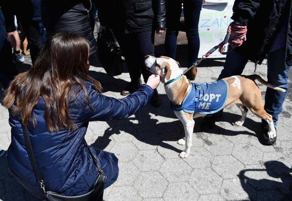 Cerca de 300 mascotas fueron puestas en adopción.