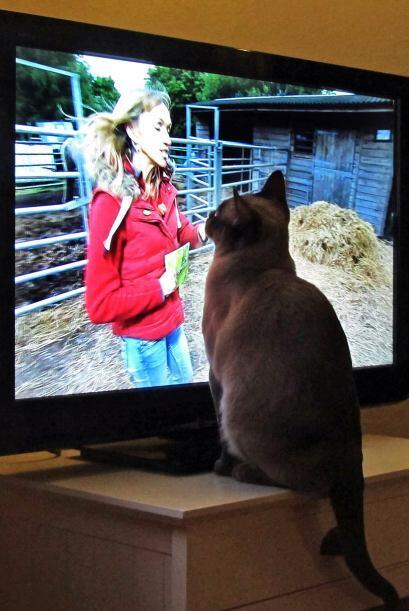 Tiene muchos programas favoritos.