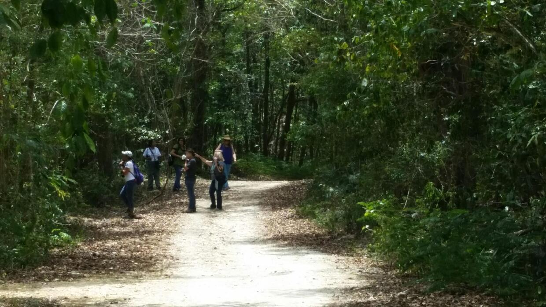 Gente caminando por bosques