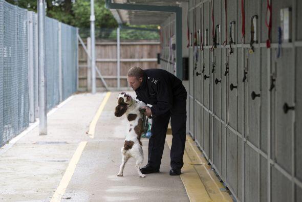 Los beneficios de entrenar a estos perros son demasiados, logran encontr...