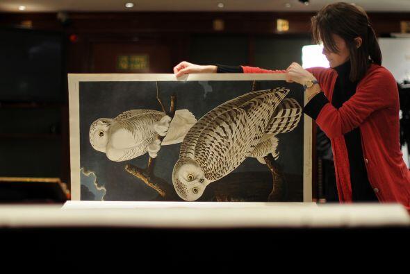 """Una magnífico ejemplar de """"Aves de América"""" del naturalista James Audubo..."""