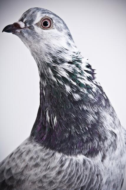 ¡Las aves también saben posar!