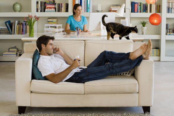 Pero si eliges a los gatos entonces debes tomar en cuenta que ellos son...