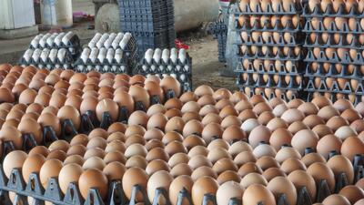 Escasez de huevo afecta la economía