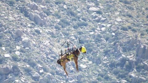 El caballo fue rescatado tras caer en un camino en montañoso.