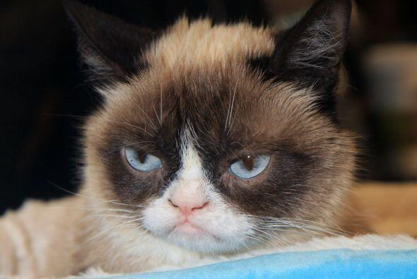Su primer video en YouTube con el nombre 'The original Grumpy Cat' tiene...