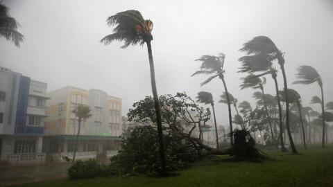 Un árbol caído por los fuertes vientos del huracán...