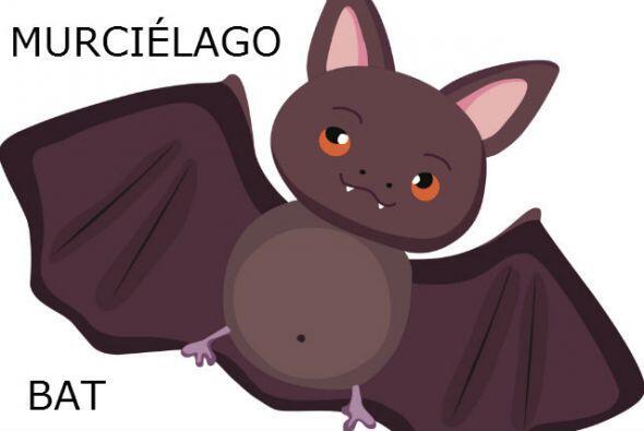 MURCIÉLAGO - BAT