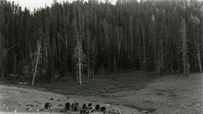 Imágenes curiosas de los parques nacionales de cuando la fotografía era en blanco y negro