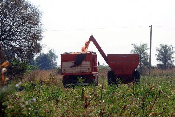El pequeño agricultor, quien prueba suerte plantando soja RR, es a menud...