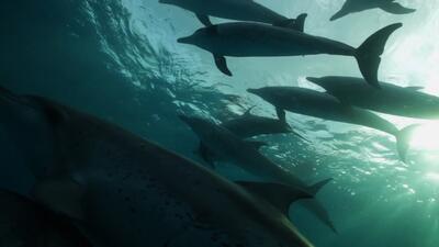 """""""El trabajo continua hasta que la masacre de delfines se acabe"""""""