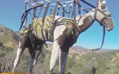 Sorprendente rescate desde el aire a un caballo que cayó por una ladera...