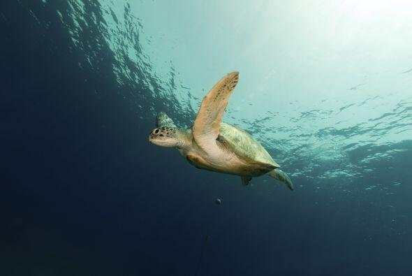 Soñar con animales acuáticos, sin son mamíferos como los delfines y ball...