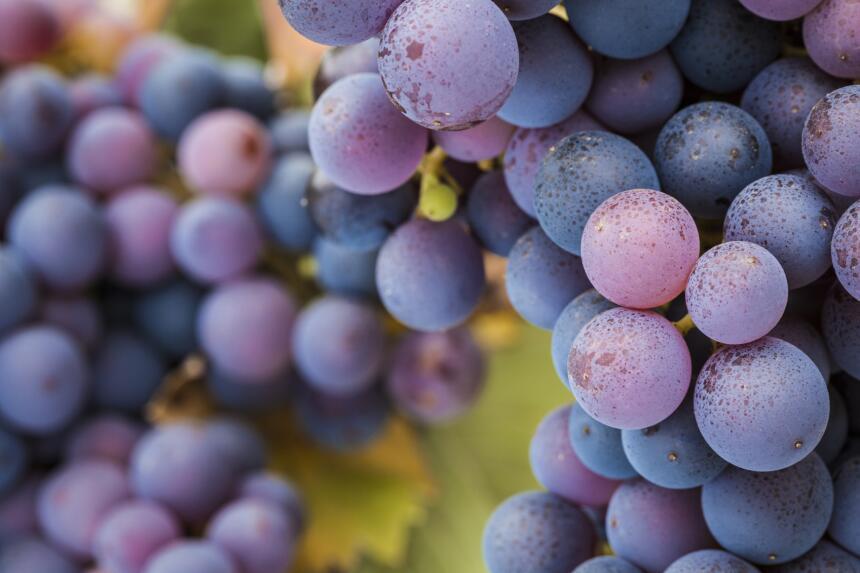 salud uvas