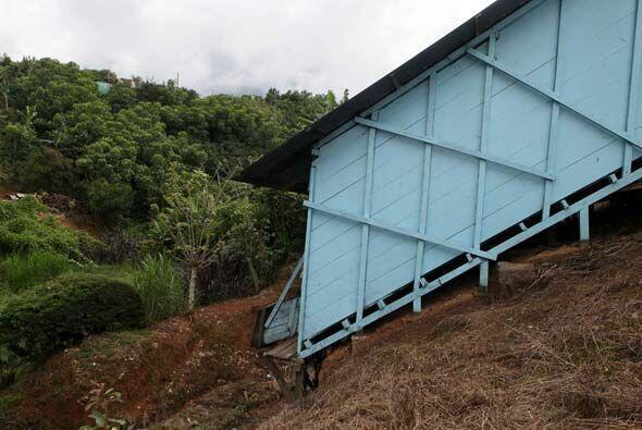De este modo, nace en los campos de Costa Rica, llega a los Recibidores...