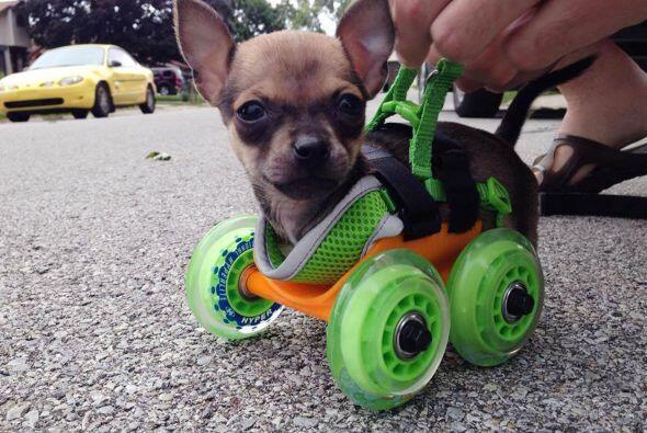 Aunque por ahora  es muy pequeñito y la silla de ruedas es especialmente...