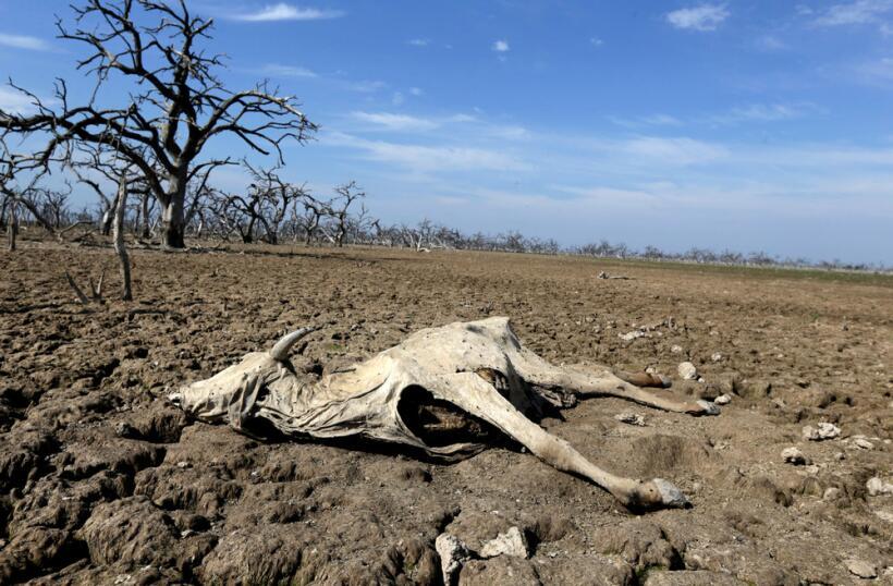 Paraguay está padeciendo una crisis ecológica de tremendas...