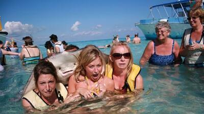 La foto fue tomada en la Ciudad Mantarraya en las Islas Caimán hace 5 añ...