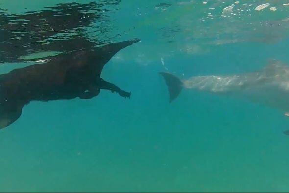 Los mamíferos acuáticos amablemente nadaron alrededor de Kira que estaba...