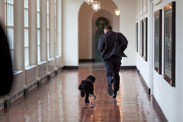 Todo lo que Obama hará ahora que deja la presidencia obama_232.jpg