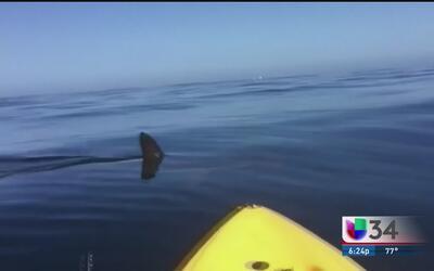 Avistamiento de tiburones en el sur de CA
