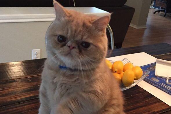 Ten cuidado: tu gatito puede querer hipnotizarte