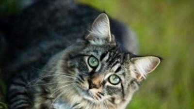 La música para los gatos es un descrubrimiento que podría mejorar el com...