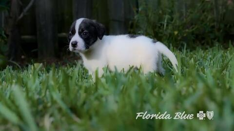 En Florida, una aseguradora se vale de unos tiernos cachorritos para atr...