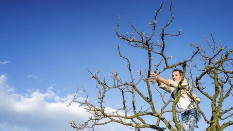 Muchas ciudades podan los árboles de manera indiscriminada y sin tener e...