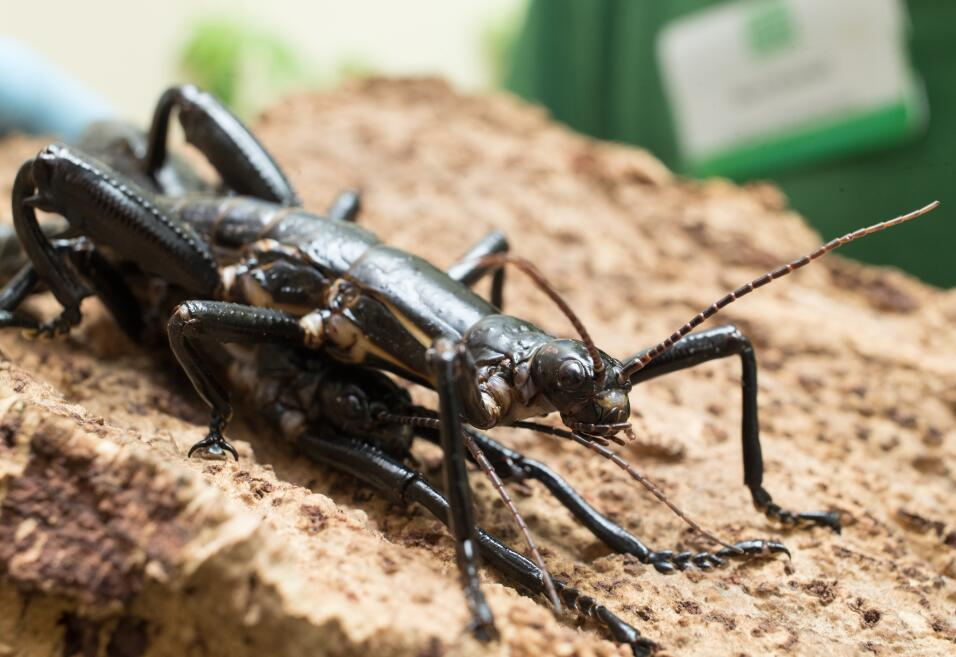 La mordedura de un insecto que envió a un hombre al hospital sigue siend...