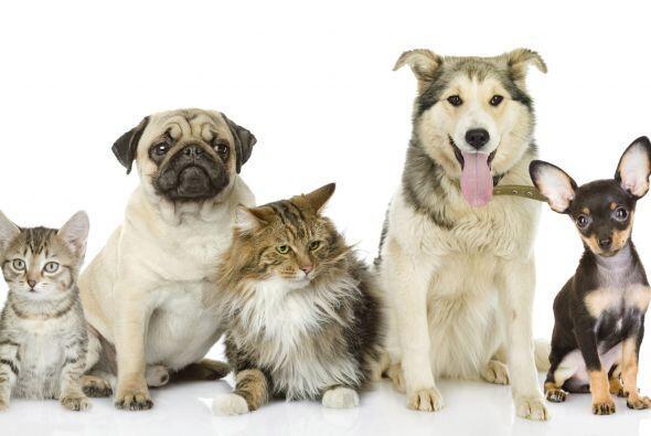 Tanto los gatos como los perros son adorables, sólo toma la decisión.