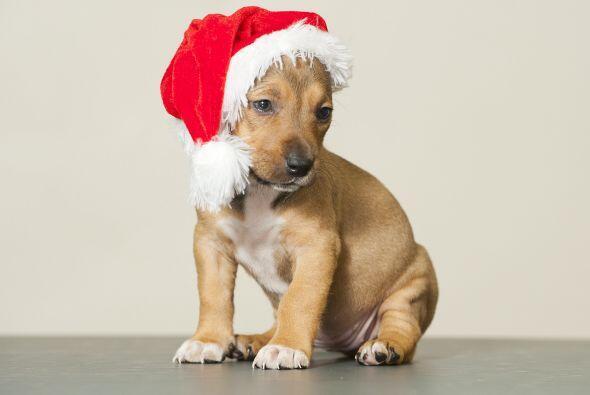 Adorables cachorros disfrazados de Santa