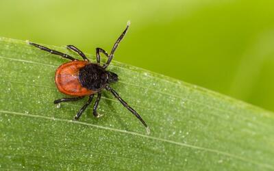 Para evitar las mordeduras, no frecuentes áreas boscosas y zonas...