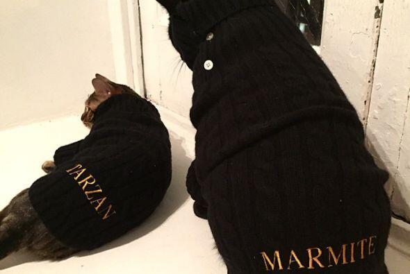 Harley tienen a dos bellas gatitas, Tarzan y Marmite.