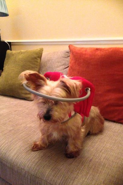 Silvie llamó a su invento 'Muffin's Halo' y ahora en su sitio oficial lo...