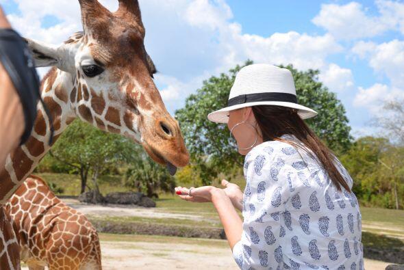 Kia llevó a las bellas al zoológico de Miami para convivir con los anima...