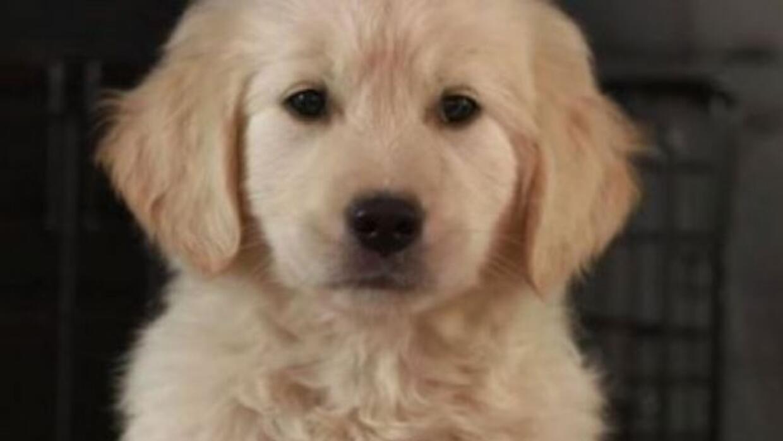 """El anuncio del """"cachorrito"""" no saldrá en Super Bowl"""