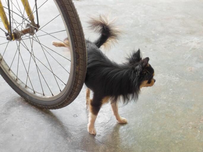 ¿Cómo hacer que mi perro haga pipí donde debe?