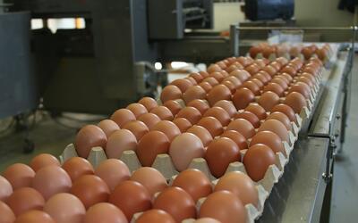 Luego de consumir los huevos, 22 personas resultaron enfermas.