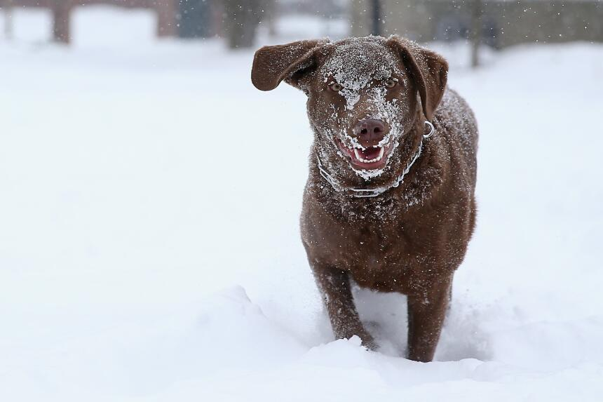 Protege a tu mascota del frío