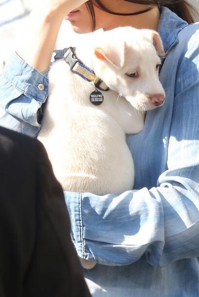 El can, a quien aún no ha dado nombre, parecía contento de tener una nue...