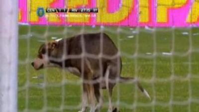 Un perro haciendo sus necesidades en pleno partido de la liga de Argentina.
