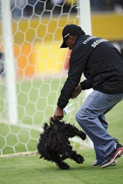 En el mismo partido un perro hincha fana de Venezuela se metió en el cam...