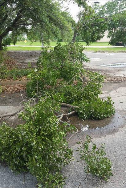 Un tornado tocó la ciudad de Giddings en el condado Lee, ocasiona...